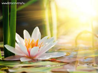 Az Élet céljának törvénye (Dharma)