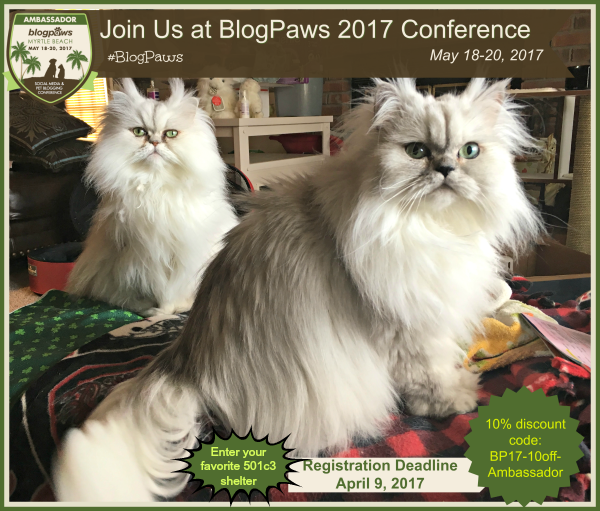 Brulee and Truffle with BlogPaws registration graphic