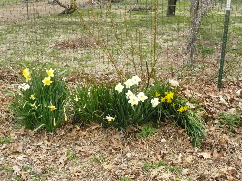 Living and Gardening in the Ozarks: 2018