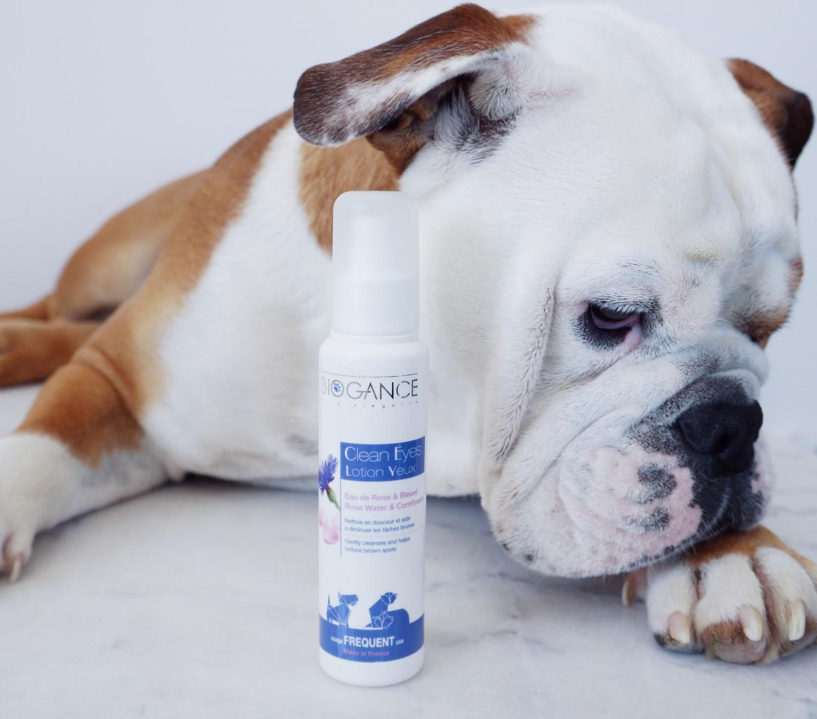biogance traces de larmes brunes chien bulldog