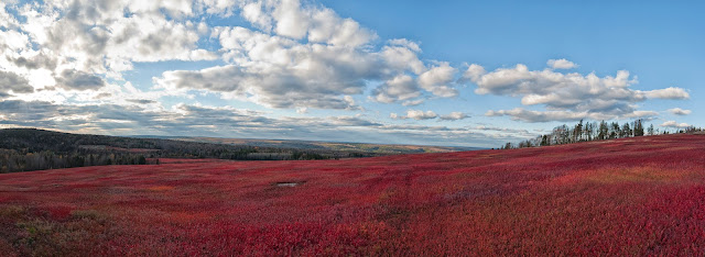 Photo of cranberry fields