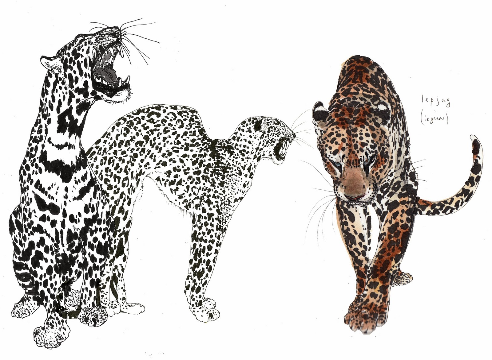 leopard and jaguar hybrid - photo #2