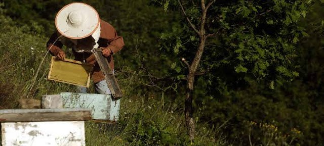 Τεράστιες απώλειες για τους μελισσοκόμους.  Δίνονται αποζημειώσεις στους πληγέντες απο το βαρύ χειμώνα...
