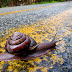 How Does a Human Dressed as a Snail Cross the Road?