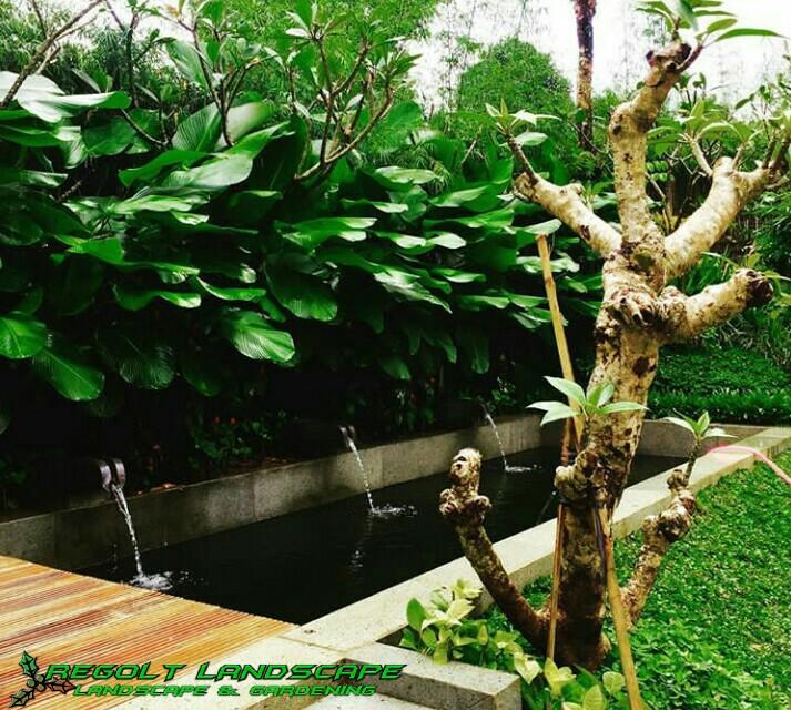 Gallery Kolam Minimalis - Koi Regolt Landscape