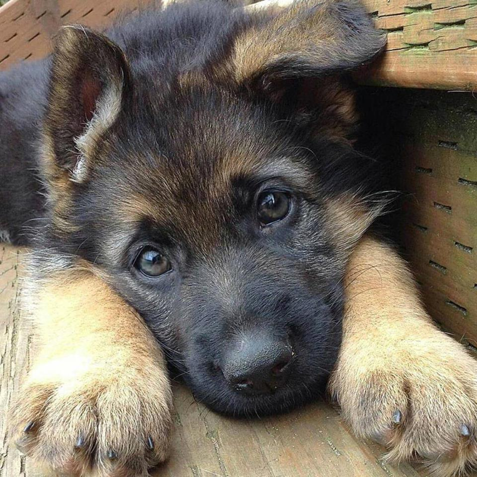 Cute dogs - part 167, cute dog photos, best funny dog pics