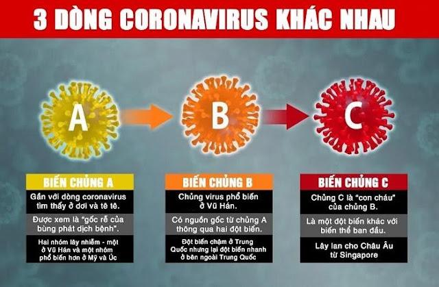 Covid-19 biến chủng thành ba dòng khác biệt khi lây lan ra toàn cầu