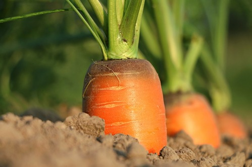 pixabay.com/en/carrot-why-growth-diet-1565597