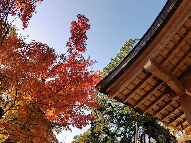 鶴岡八幡宮內的秋色