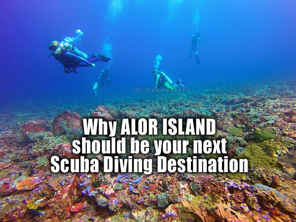 Dive Guide for Alor Island