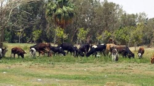 قبل عيد الاضحي | تحذير من وجود بكتيريا قاتلة فى لحوم الأبقار