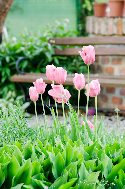 Spring garden / Jarná záhrada