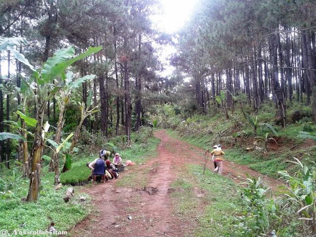 Sekelompok ibu yang sedang mengurusi bibit pohon pinus