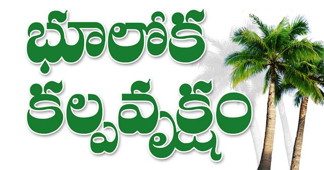 భూలోక కల్పవృక్షం Bhooloka Kalpavruksham Kobbari Chettu Coconut Tree Coconut