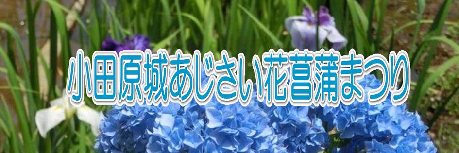 小田原城あじさい花菖蒲まつり