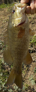 potomac smallmouth