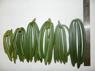 Vanilla-iliyovunwa