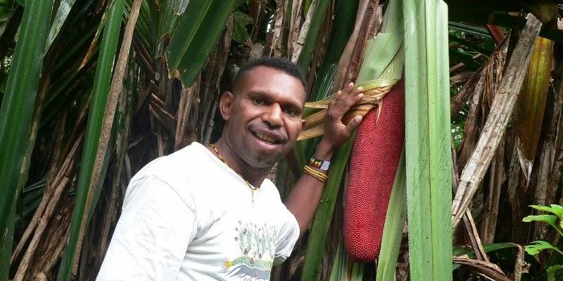 Buah Merah Papua  Aku Buah Sehat