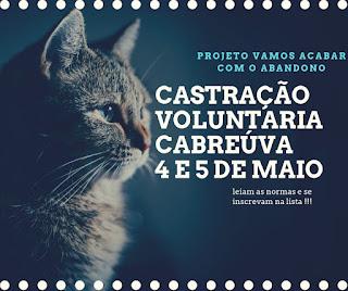 castração de gatos Cabreúva