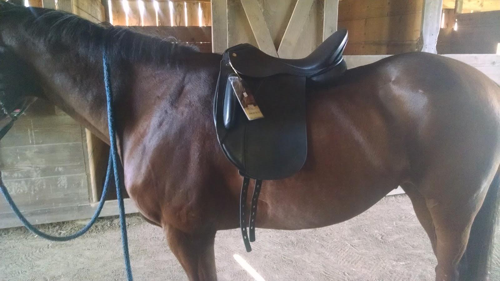 Dream Big: More Saddles!
