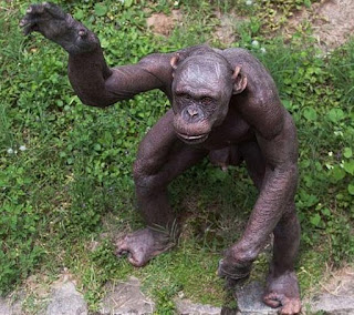 Chimpanzee Facts In Hindi-Rochak Tathya-Factslides