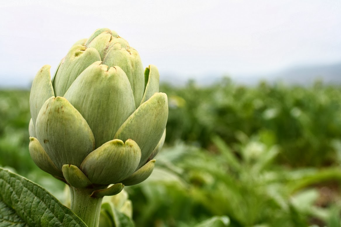 Alcachofa para adelgazar inyectable anticonceptivo