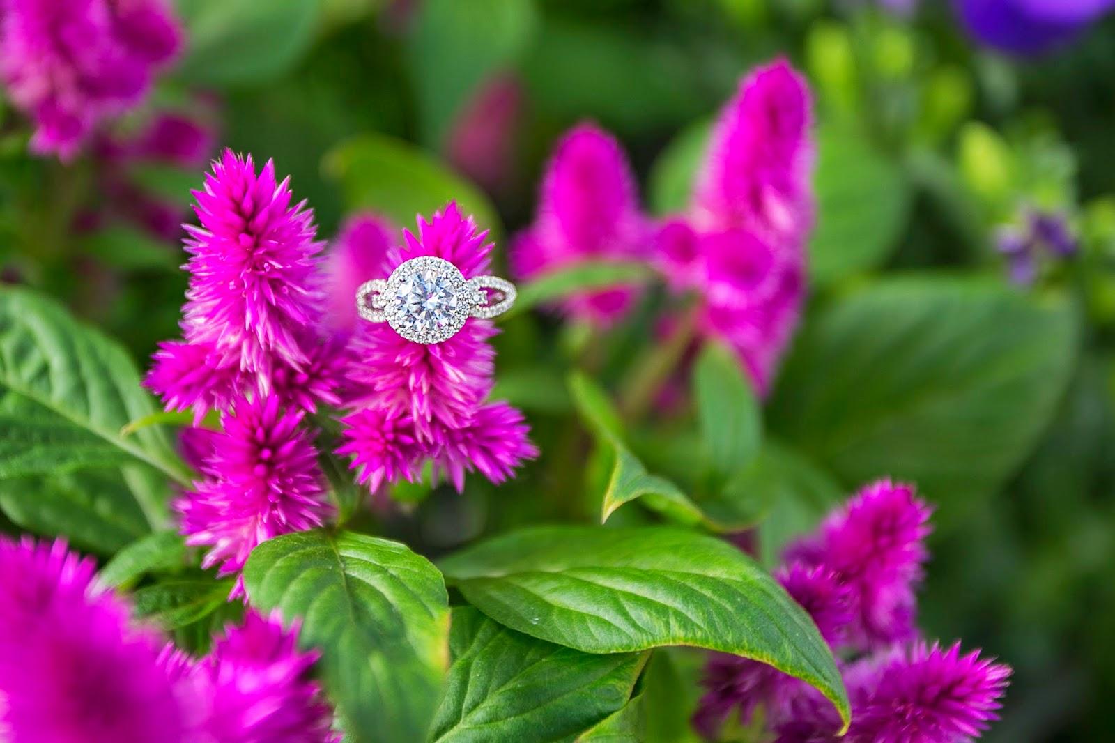 pocket of blossoms: cactus & tropicals