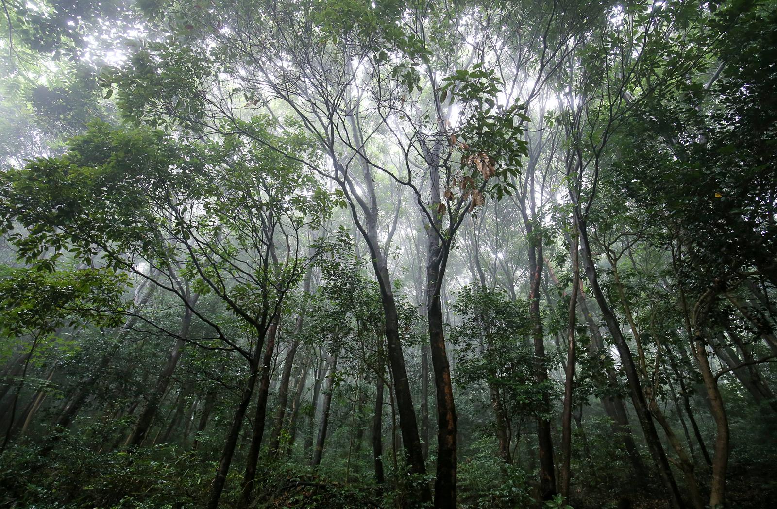 완도수목원 난대숲