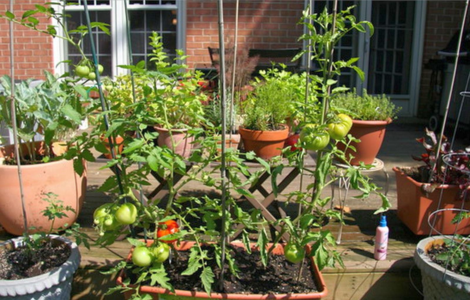 Minimalist home garden ideas halamanku halamanmu for Minimalist house with garden