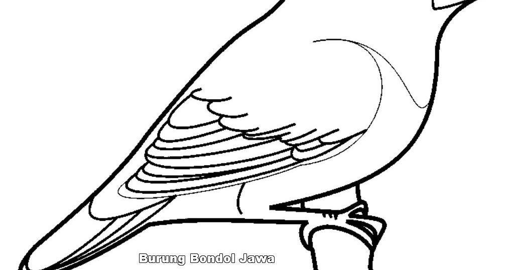 Mewarnai Gambar Burung Mewarnai Gambar