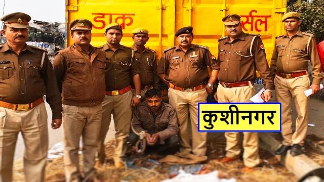 कुशीनगर - अबैध शस्त्र सहित पशु तस्कर गिरफ्तार