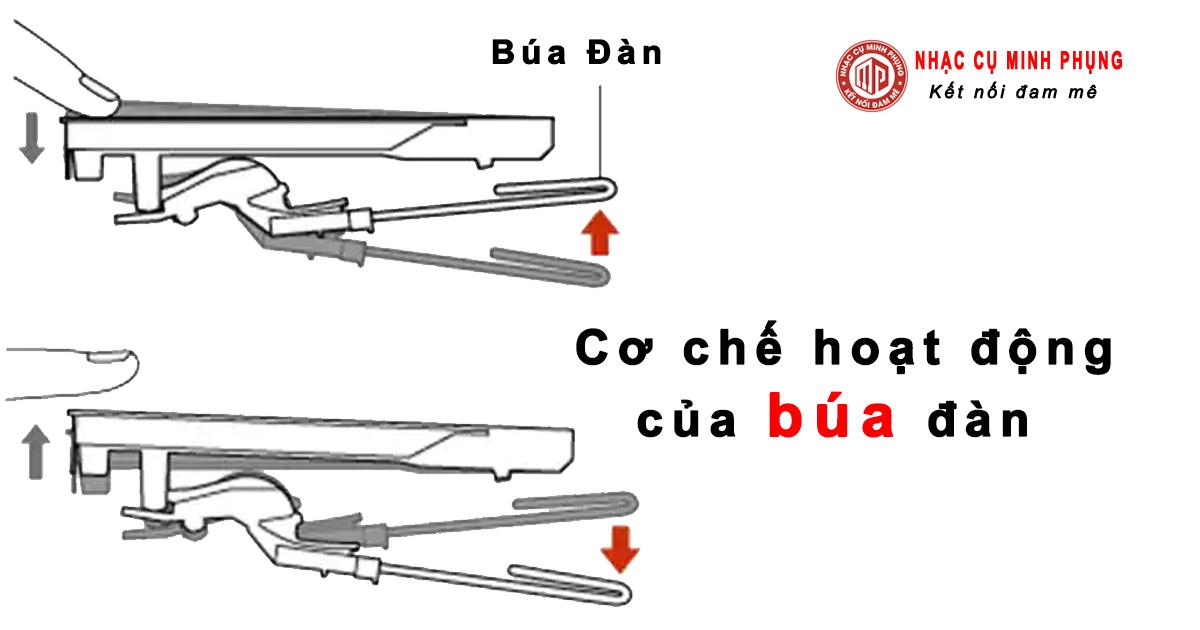 Biểu đồ dưới đây cho thấy cơ chế hoạt động của búa đàn trong hệ phím của dòng Piano điện Clavinova (hệ phím GH/GH3/NW)