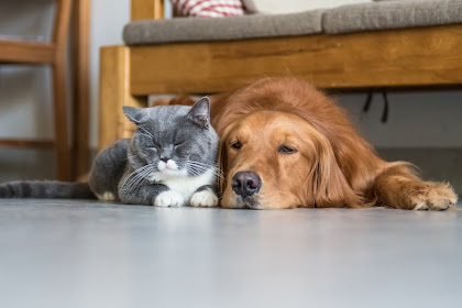 Here Are the Best Pet to Have with a Dog