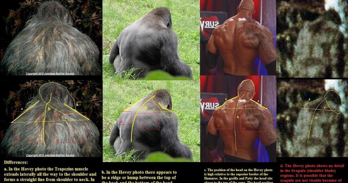 Sasquatch Enlightenment: Surface anatomy of the Hovey photo