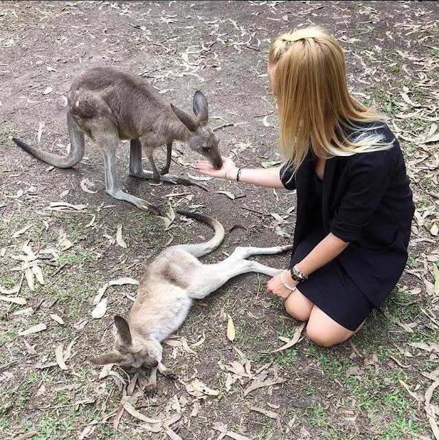 Kangourous en Australie