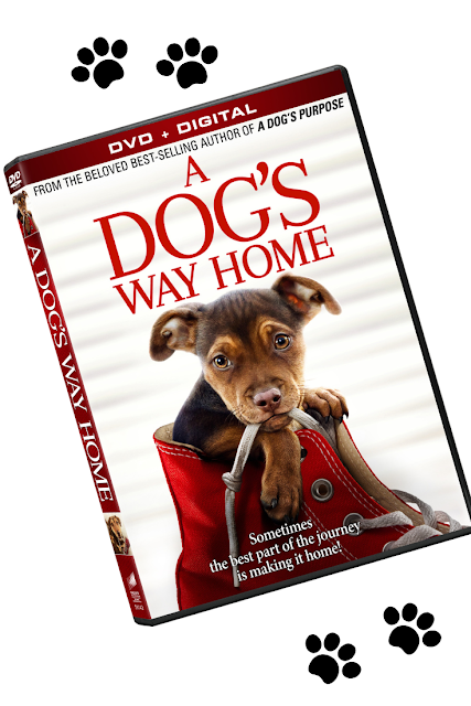 A Dogs Way Home Movie Sony DVD Bluray