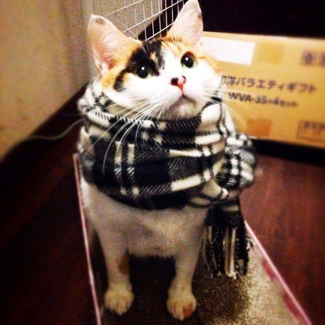 Hipster cat wearing a plaid scarf. Better with a mustache? marchmatron.com
