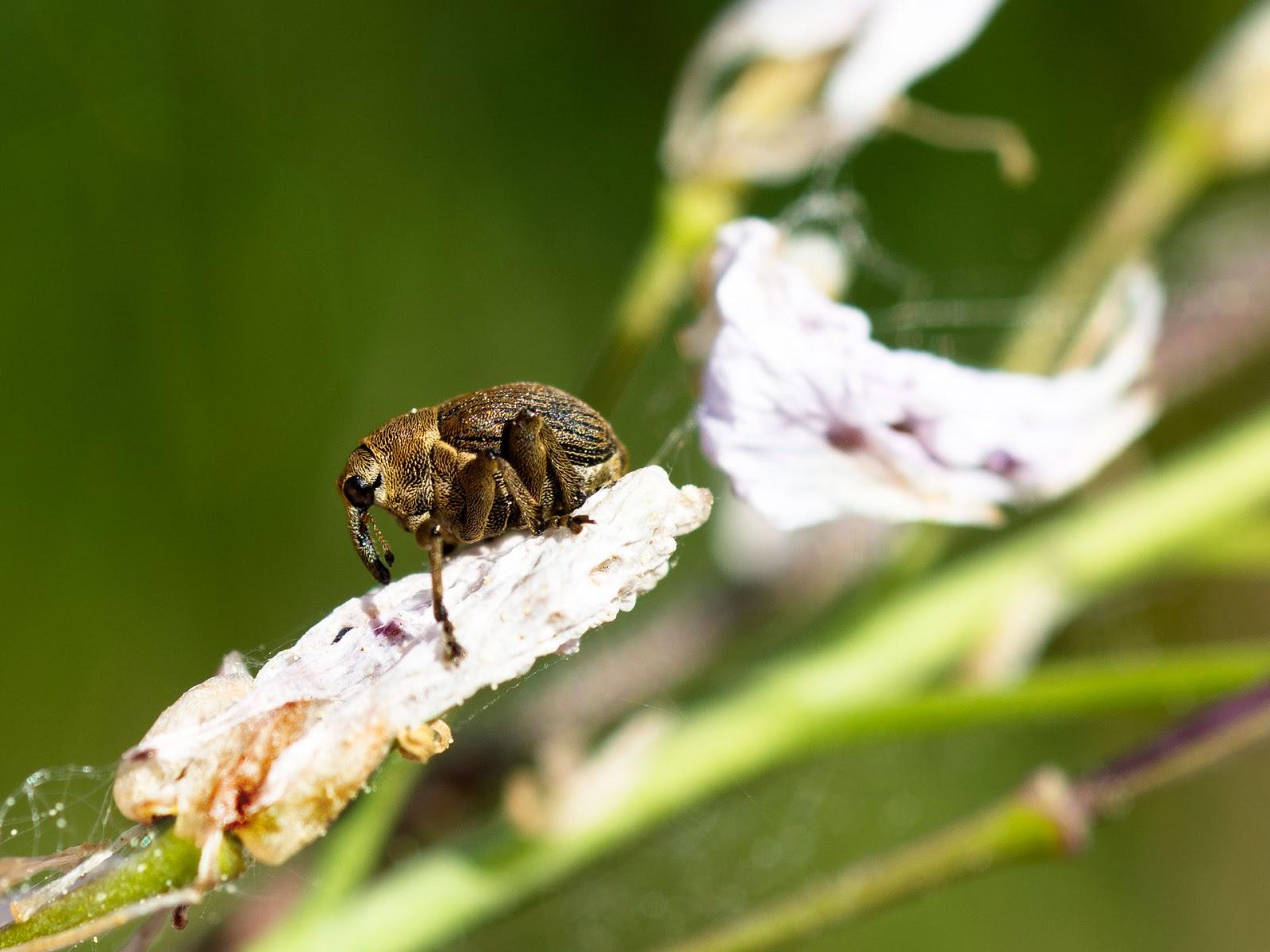 Tache blanche sur l 39 iris for Tache blanche sur bois fonce
