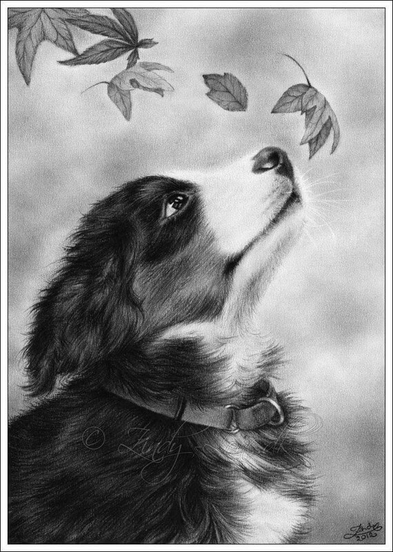 06-Bernese-Mountain-Dog-Zindy-Nielsen-Fantasy-Animals-Meet-Realistic-Ones-www-designstack-co