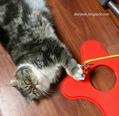 Popoki the cat with the Magneticat toy