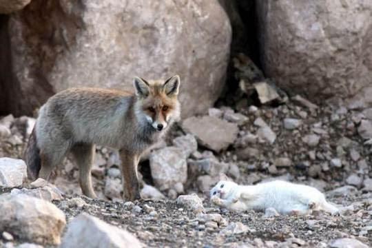 cat and fox best friends