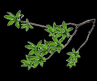 ramas,branches,hojas,png,paisajes,elementos,arquitectura,recursos,follaje