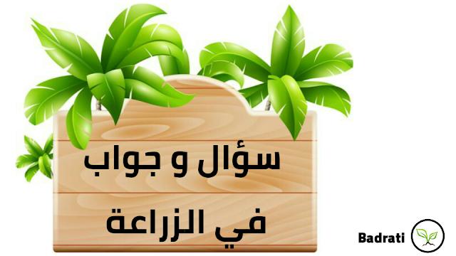 مشاكل و حلول للزراعة المنزلية