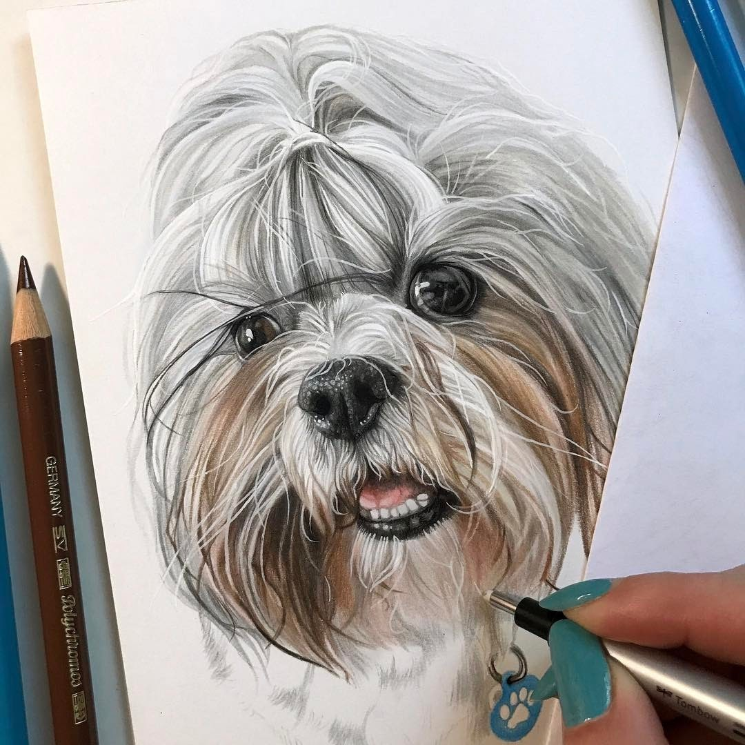 11-Portrait-in-Progress-Kelly-Lahar-Our-Furry-Companions-in-Animal-Drawings-www-designstack-co