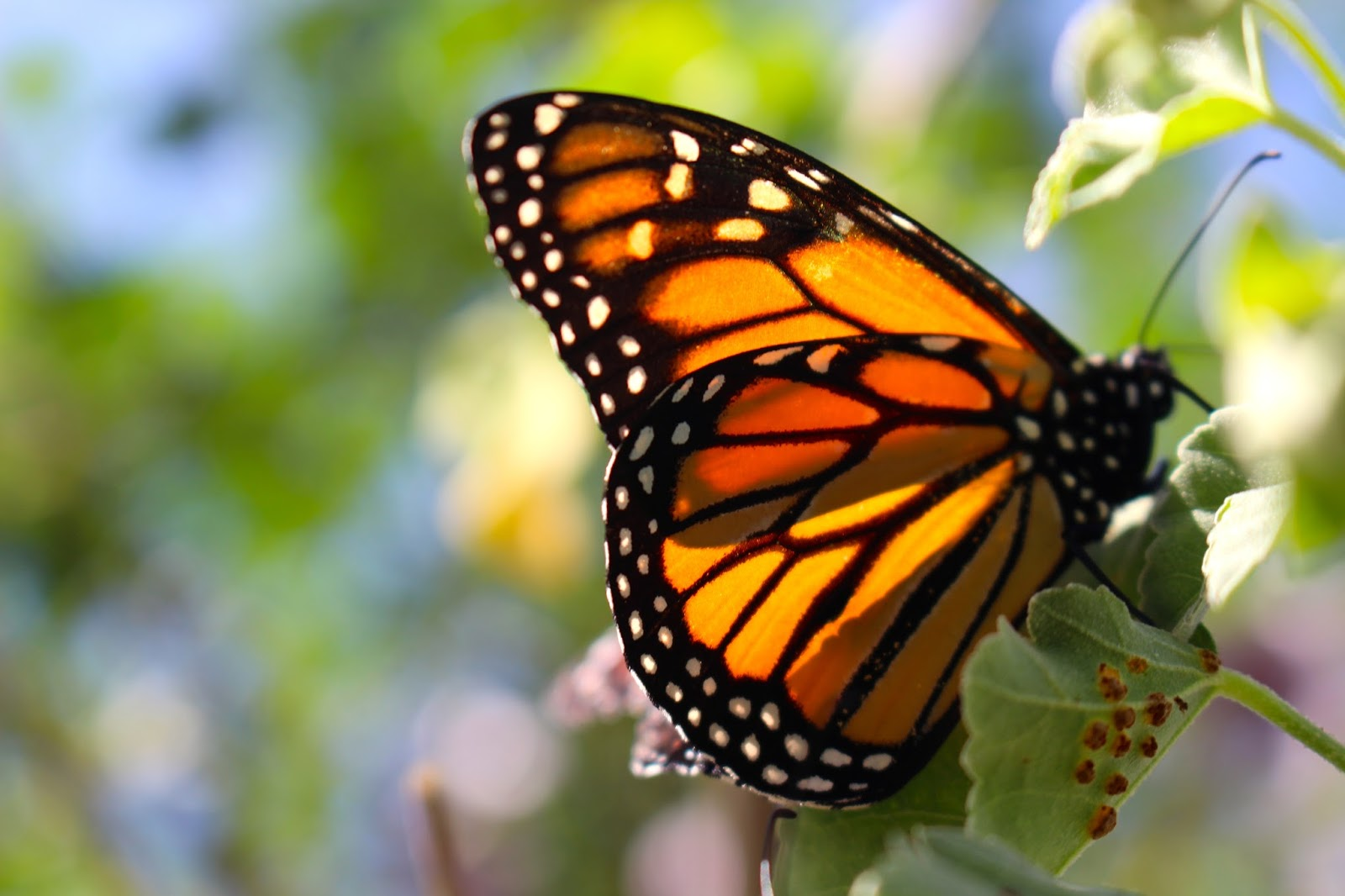 Be Brave Keep Going Discovering Butterflies In Person At