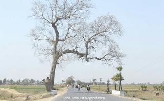 Haspura pachrukhiya Road.