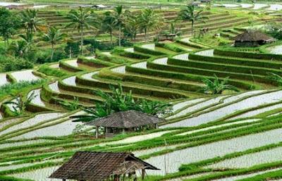 13 Warisan Budaya Indonesia Yang Telah Diakui Dunia Dan Tercatat Di UNESCO