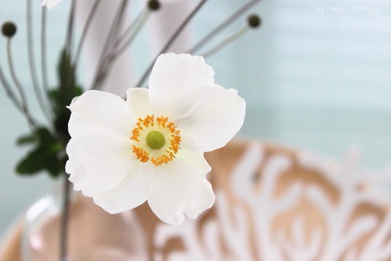 Blumen am Freitag mit Herbstanemonen aus dem Garten auf dem Südtiroler Food- und Lifestyleblog kebo homing, Styling und Photography, flowers, flowerlove, flowerday