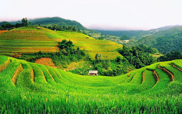 12 Months, What Did You Miss in Sapa? 8
