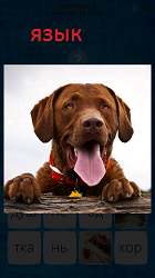 Собака на задних лапах высунула язык
